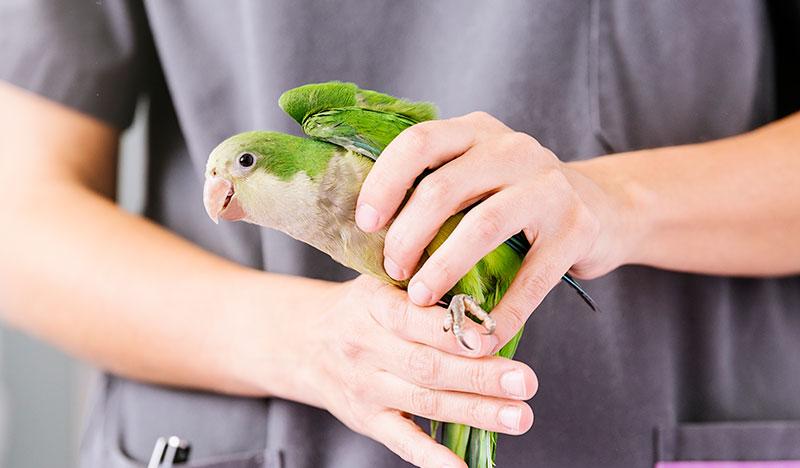 Kuş Veterineri